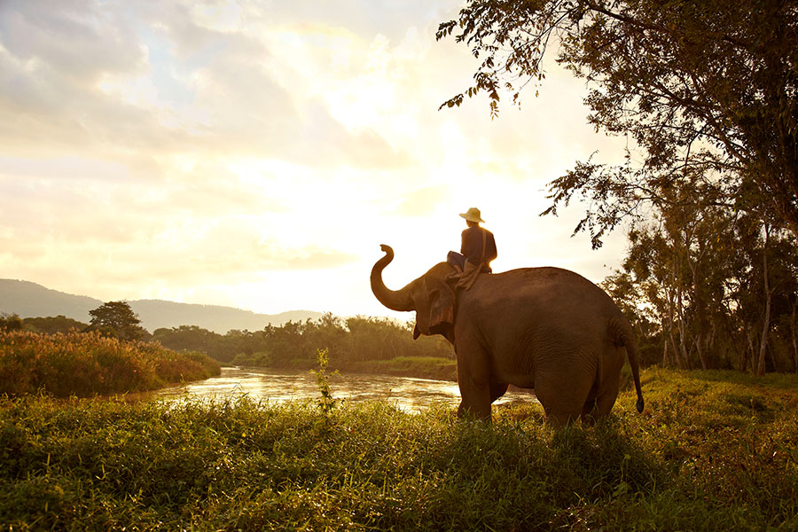 Anantara-Golden-Triangle_Elephant_and_Mahout