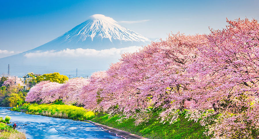 Mt. Fuji, Japan spring landscape and river with cherry blossoms.